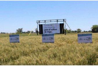 Argentina da un paso clave para aprobar el primer trigo transgénico del mundo