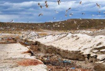 Desechos pesqueros se usan para el saneamiento ambiental