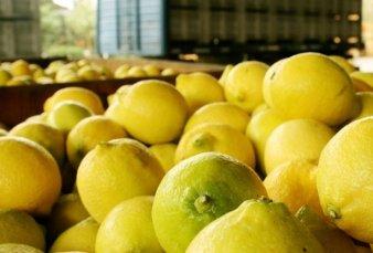 Un paro de transportistas en Tucumán afecta la exportación de limones