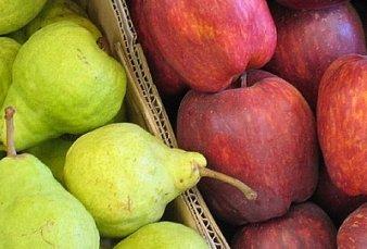 Avanza prórroga de emergencia en peras y manzanas en cinco provincias