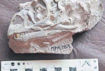 """Afirman que un dinosaurio que vivió en la Patagonia """"gateaba"""" cuando era bebé"""