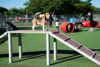 Perros porteños: ya tienen un parque exclusivo, una app y un community manager