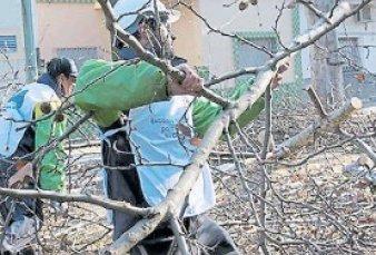 Arrancó la poda de invierno y ya se puede pedir que corten ramas y raíces de los árboles