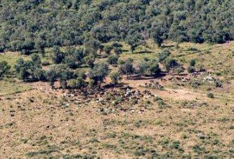 Bosques: el Chaco es uno de los 11 lugares con mayor deforestación