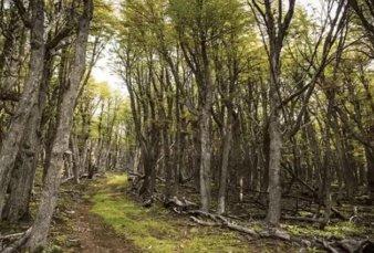 Preocupación de científicos por bosques nativos en Córdoba