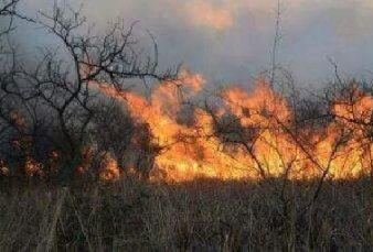 Catamarca: Un incendio forestal afecta más de 300 hectáreas