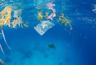 La fauna de los océanos, cada vez más contaminada con microplásticos