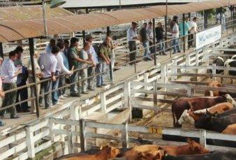 Un parque temático gauchesco ocupará el predio del Mercado de Hacienda de Liniers