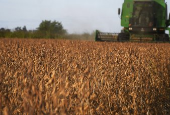 Brasil está a punto de superar a EE.UU. como primer productor mundial de soja
