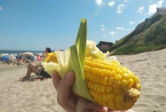 Choclo dolarizado en la costa: ya se vende a más de $100