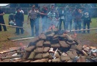 Indonesia: quemaron marihuana incautada y drogaron a todo un pueblo