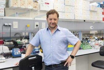Avance: científicos argentinos mapearon un proceso clave del desarrollo neuronal