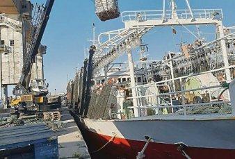 Récord de descarga de calamar en el puerto de Mar del Plata
