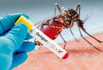 Dengue: especialistas advierten sobre la presencia de mosquitos antes del verano