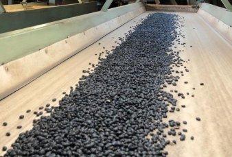 México compra 70.000 toneladas de porotos y afianza la relación con Argentina