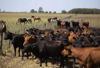 Encuentran ganado robado en un campo de José Alperovich