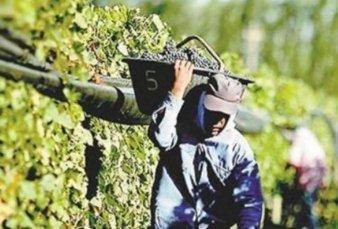 Se eleva la vara paritaria: vitivinícolas cerraron en 47%