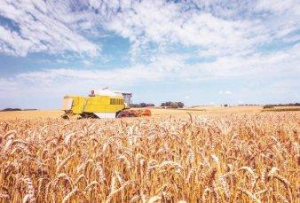 Proyectan récord de trigo y cebada para la campaña fina