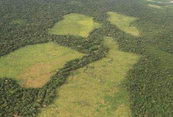 Deforestación récord en mayo en la Amazonia brasileña