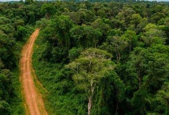 Misiones pide una compensación económica por cuidar la selva